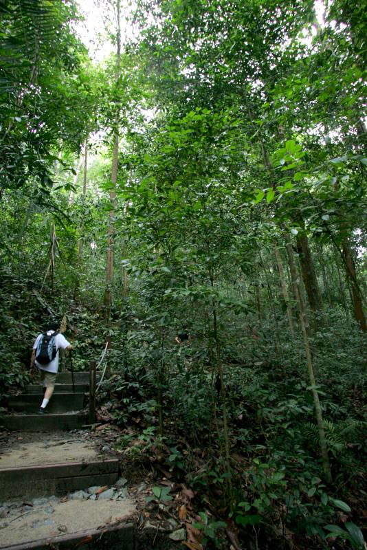 """传说武吉知马山里有身高5尺的""""猴人""""出没。(档案照)"""