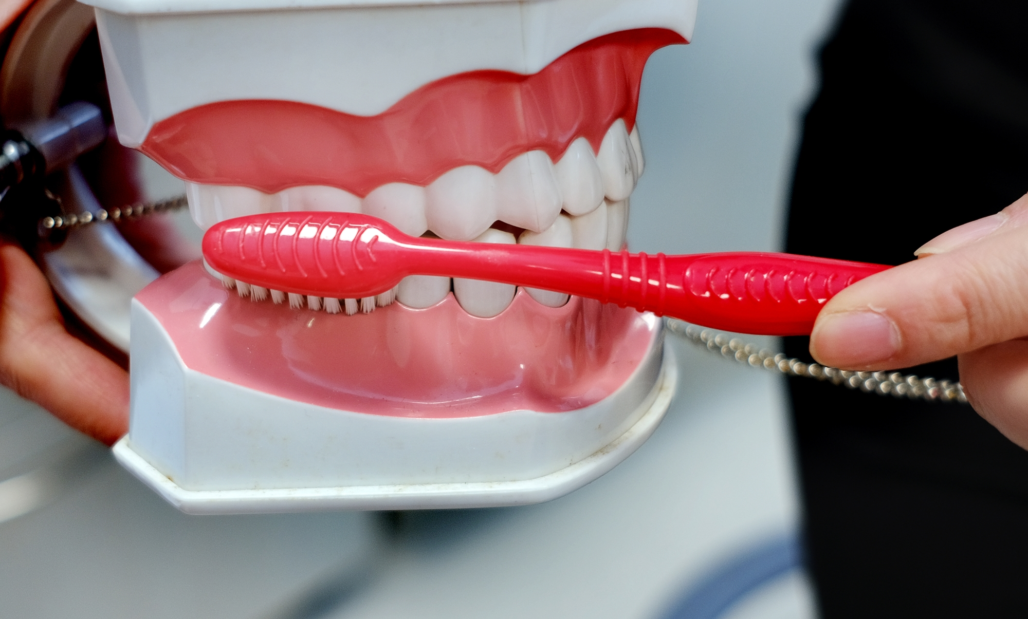 刷牙时力度不要太大力,牙龈和牙齿间用牙刷轻刷干净,能保护牙龈的健康。